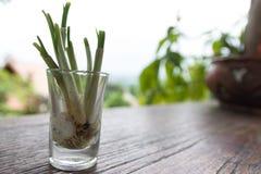 стеклянная весна лука Стоковая Фотография