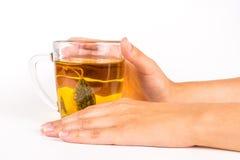 Стеклянная кружка травяного чая стоковые изображения