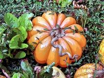 Стеклянная тыква Стоковая Фотография RF