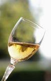 стеклянное игристое вино стоковые изображения