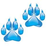 Стеклянные следы ноги большой кошки Стоковое фото RF