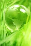 Стеклянный глобус в листьях стоковое фото rf