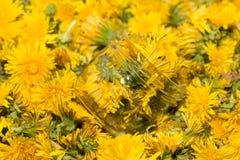 Стеклянный опарник на естественной предпосылке желтых одуванчиков Отмелый de Стоковое Фото