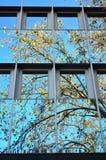 Стеклянный фасад современного офисного здания Стоковое Изображение RF