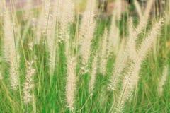 Стеклянный цветок Стоковое Фото