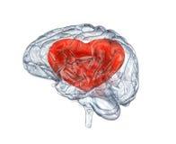 Стеклянный человеческий мозг Стоковые Изображения