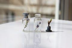 2 стеклянных опарника с цветками внутри и одним цветком затем Стоковое фото RF