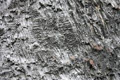 стена базальта Стоковая Фотография RF