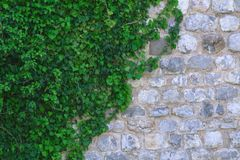 Стена белого и серого камня в зеленых листьях стоковые фотографии rf