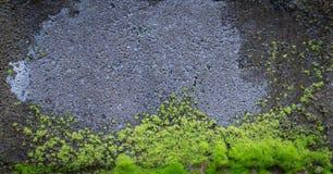 Стена бетонной плиты с зеленым mos Стоковое Изображение RF