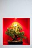 стена вала бонзаев утопленная сосенкой Стоковое Изображение RF