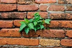 стена вала кирпича Стоковая Фотография RF