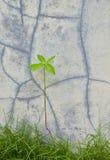 стена вала пускать ростии grunge малая Стоковые Изображения RF