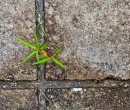 стена вала пускать ростии grunge малая Стоковое фото RF
