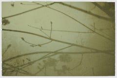стена вала теней ветвей Стоковые Изображения RF