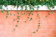 стена вала цемента верхняя Стоковые Изображения