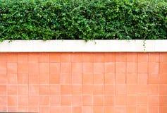 стена вала цемента верхняя Стоковая Фотография RF