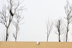 стена вала Стоковое Изображение