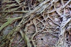 стена вала корня кирпича старая Стоковые Фото