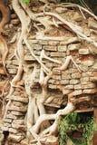 стена вала корня стародедовского кирпича померанцовая Стоковые Фотографии RF
