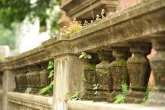 Стена весны зеленая Стоковая Фотография RF