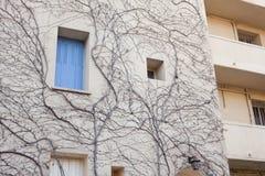 Стена ветвей перерастанных домом сухого дерева Стоковая Фотография