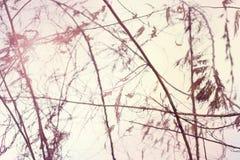 Стена год сбора винограда Стоковые Изображения RF