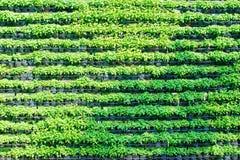 Стена дерева в саде Стоковые Изображения RF