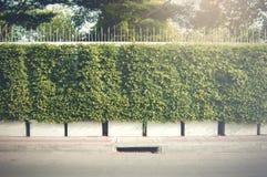Стена дерева Стоковое Фото