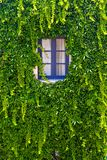 Стена дома при окно покрытое с плющом стоковое изображение rf