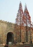 стена ели Стоковое Фото