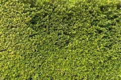 Стена дерева Стоковое фото RF