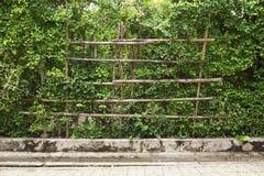 Стена завода в саде природы Стоковые Изображения RF