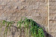 стена завода Стоковые Изображения RF