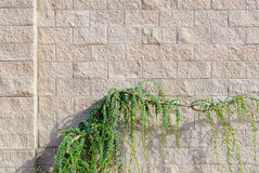стена завода Стоковые Изображения