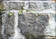 стена зеленого завода фасада Стоковое Изображение RF