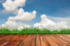 стена зеленого цвета травы кирпича старая Стоковое Фото