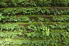 Стена зеленого растения стоковое фото rf