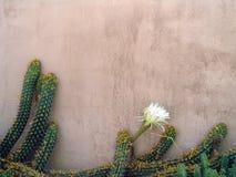 стена зюйдвеста Стоковые Изображения