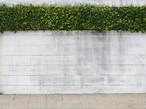 стена листьев цемента зеленая Стоковое фото RF