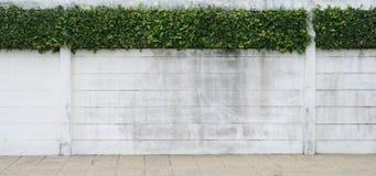 стена листьев цемента зеленая Стоковое Фото