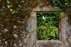 Стена и окно покинутого дома стоковые фото