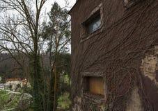 Стена и плющ Стоковые Изображения RF