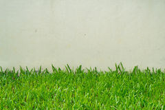 Стена и трава белого цемента Стоковые Фото