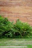 Стена каменного века с тропической предпосылкой деревьев Стоковое Изображение RF