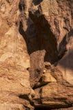 Стена каньона с деталью меток размывания воды Namibe anisette вышесказанного стоковое изображение