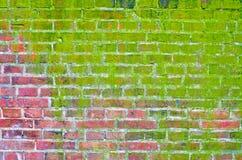стена кирпича мшистая стоковое фото