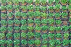 Стена листьев зеленого растения или зеленого цвета Стоковое Фото