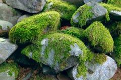 стена лишайника старая каменная Стоковое Фото