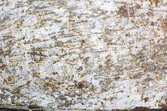 стена металла ржавая стоковые фото